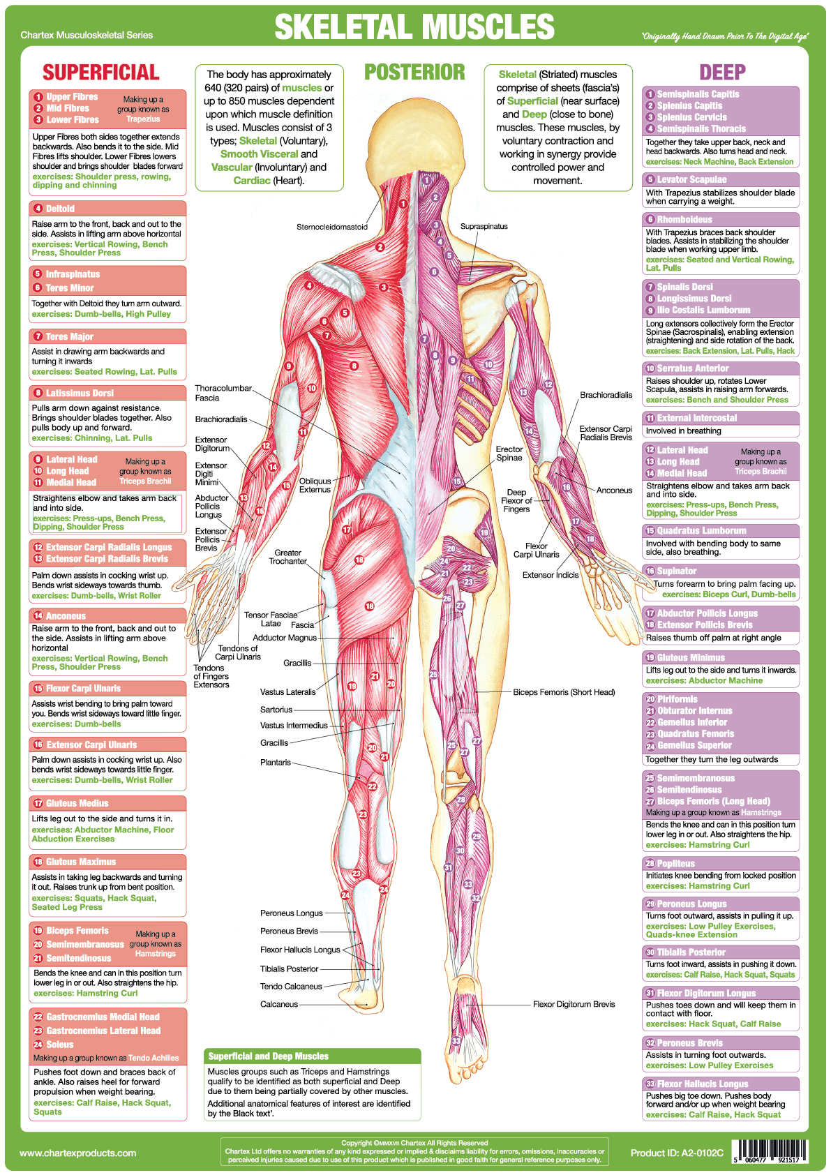 Jan Roscoe Publications Categories Posters Wall Charts Skeletal