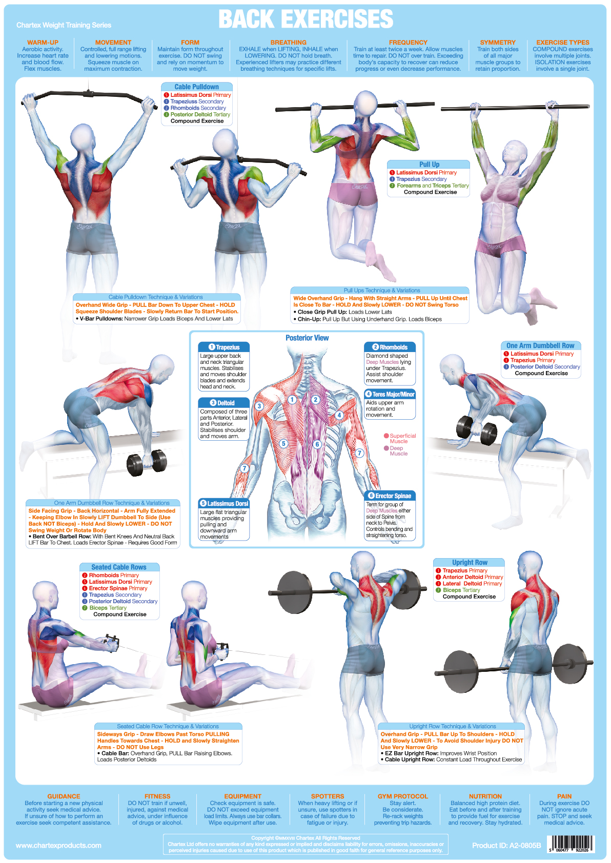 Back Muscles Weight Training - A1 Chart