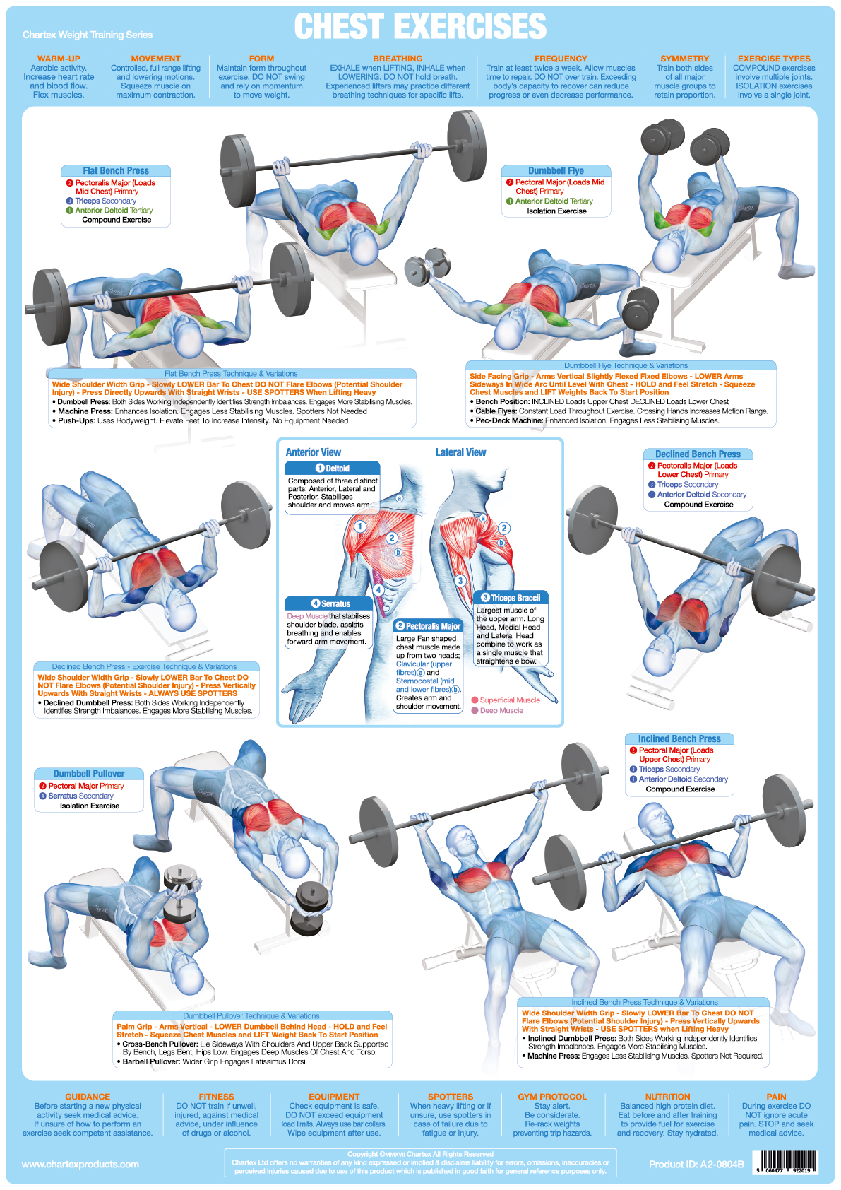 Chest Muscles Weight Training - A1 Chart
