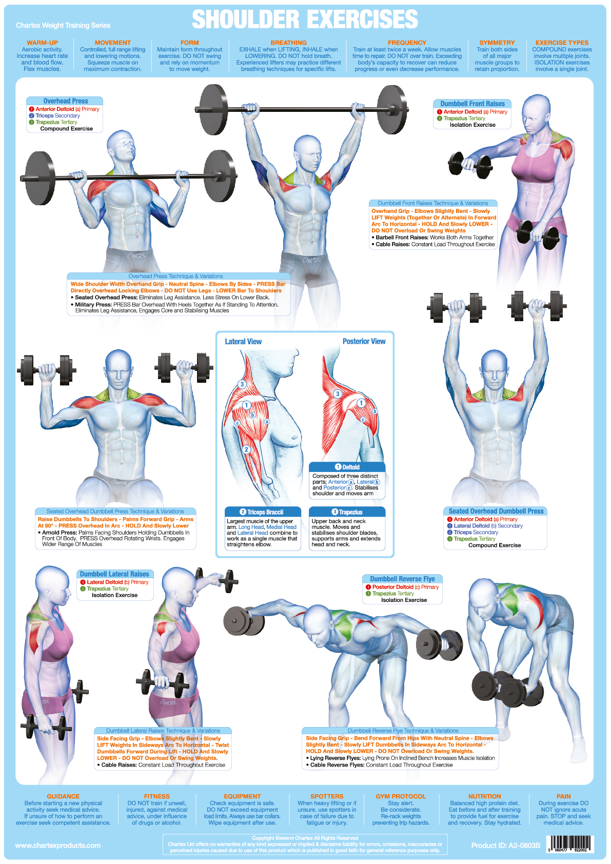 Shoulder Muscles Weight Training
