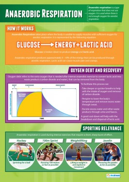 Anaerobic Respiration - Laminated A1 Poster