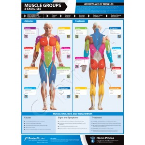 Muscle Groups & Exercises A1 Framed Weight training poster (840mm x 595mm)